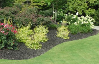 garden softscape