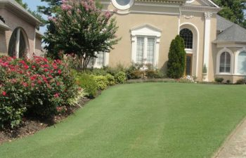 a house with a manicured lawn and well-cared plants