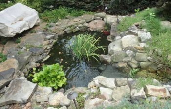 a garden pond with hardscape