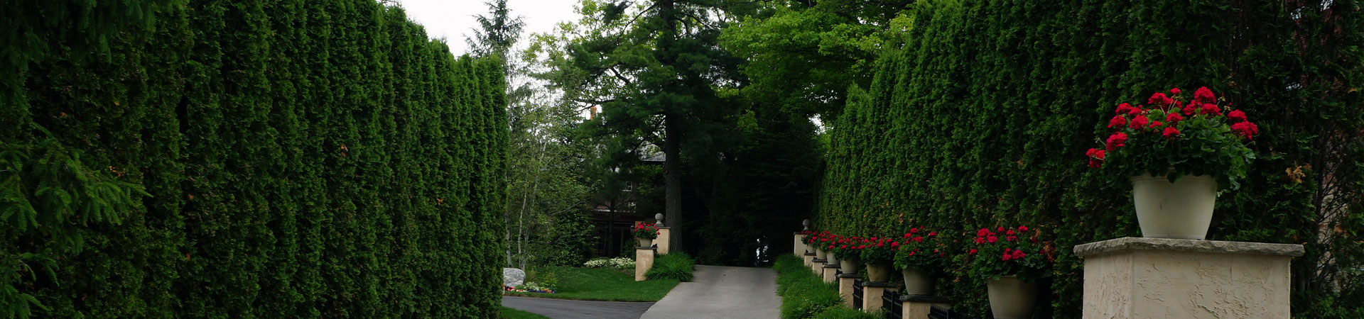 garden with privacy trees