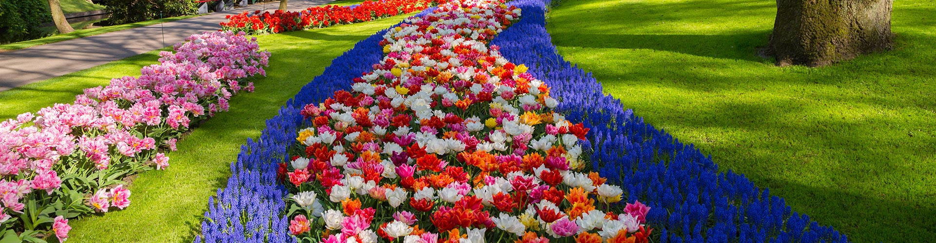 colorful seasonal flowers in a garden